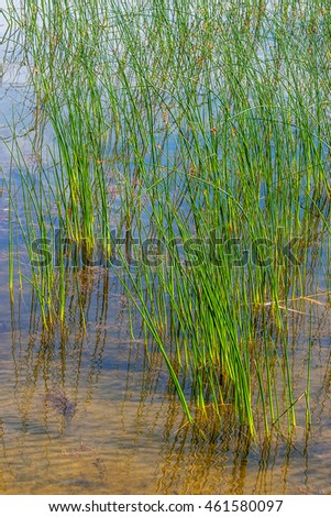 Lake beach with grass in the water