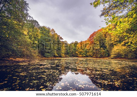 Lake covered with autumn leaves near a forest in beutiful autumn colors in the fall with fallen leaves on the water