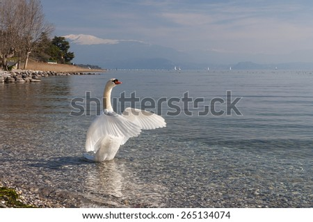Lake Garda Landscape, with a Swan, captured on the morning near Padenghe sul Garda, Brescia, Italy. Taken on March 8th, 2015. - stock photo