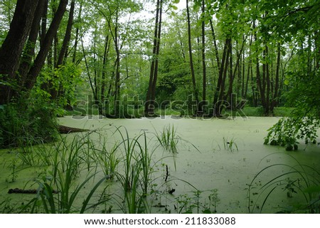 Lake in a wood green and trees - stock photo