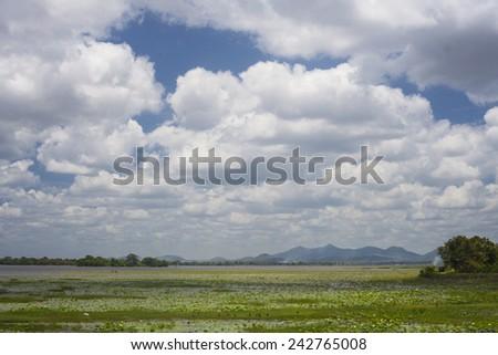 Lake in Sri Lanka  - stock photo