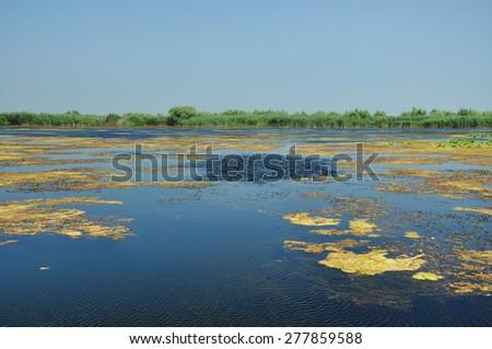 Lake in the Danube delta, Romania - stock photo