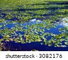 lake in the Kenai Peninsula - stock photo