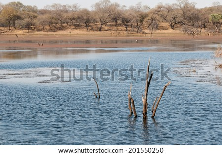 lake in the national park ranthambore in india - rajasthan