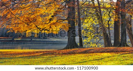 Lake in the park in autumn. Autumn Landscape. Park in Autumn. The bright colors of autumn in the park by the lake. Dry leaves in the foreground. Old trees.
