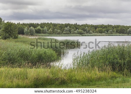 Lake in the summer with green vegetation