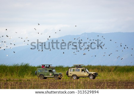 LAKE MANYARA, TANZANIA - AUGUST 4, 2015: Safari cars driving inside the Lake Manyara National Park with birds flying around in northern Tanzania, Africa - stock photo
