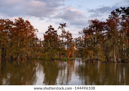 Lake Martin swamp just after sunrise.  Lake Martin is located in Breaux Bridge, Louisiana in the heart of Cajun Country. - stock photo