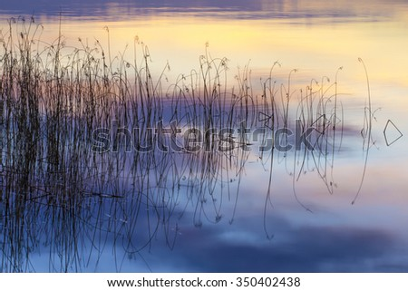 lake reeds and sunset  - stock photo