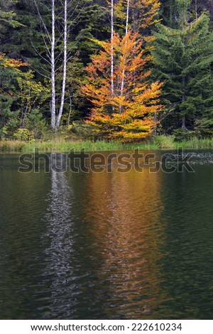 Lake shore with autumn colors