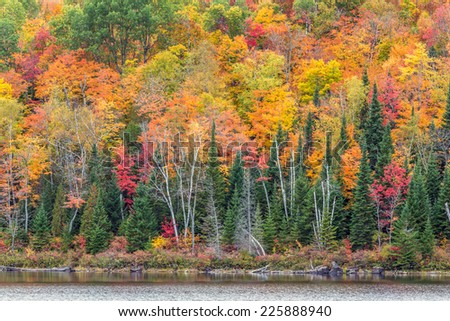 Lake shoreline in peak autumn colors - stock photo