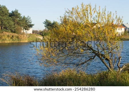 lake summer landscape