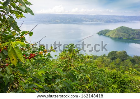 lake toba, indonesia from coffee farm