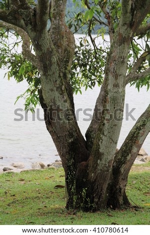Lake, Tree, Pierce Reservoir, Singapore