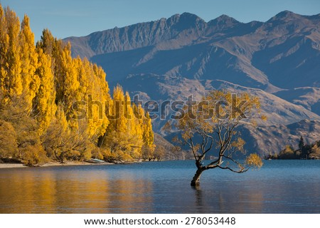 Lake Wanaka in autumn colors , Glendhu Bay , south island, New Zealand