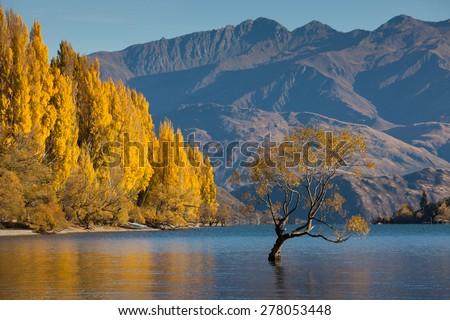 Lake Wanaka in autumn colors , Glendhu Bay , south island, New Zealand - stock photo