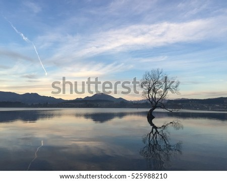Lake Wanaka lonely tree beautiful crystal clear blue water at sunset