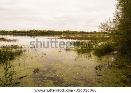 Lake with slime near the bushes