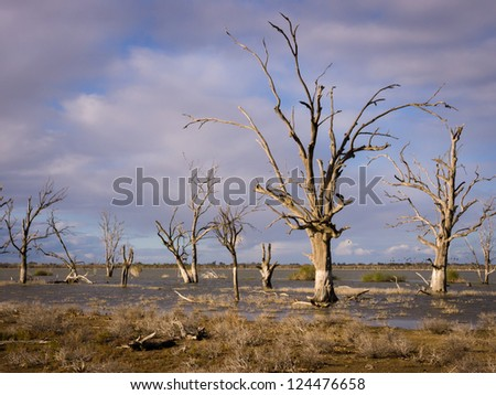 Lake Woolpolool on Calperum Station in outback South Australia - stock photo