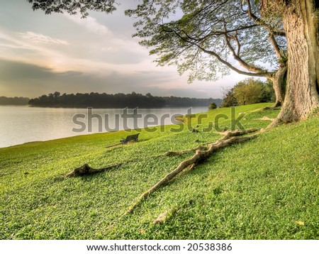 Lakeshore grassy banks under large tree
