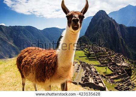 Lama at Machu Picchu, Incas ruins in the peruvian Andes at Cuzco Peru - stock photo