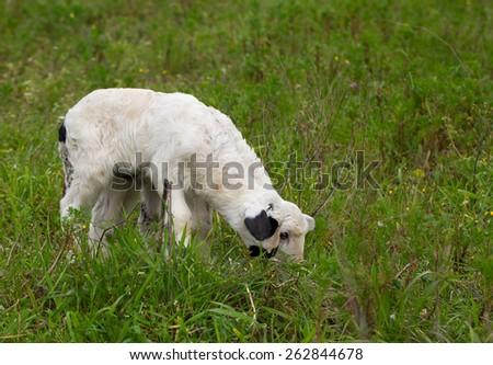 lamb meadow - stock photo
