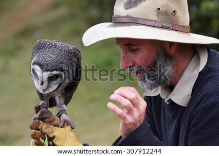 LAMINGTON GOLD COAST, AUSTRALIA - JULY 20 2015: Wildlife presentation at Oreillys Geusthouse showing the sooty barn owl
