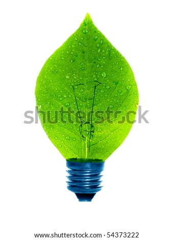 lamp green leaf. on isolated - stock photo