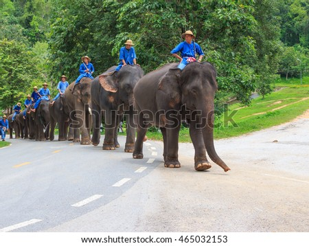 Lampang, Thailand July,2016: Daily elephant show at The Thai Elephant Conservation Center, July,2016 in Lampang, Thailand.