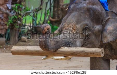 Lampang, Thailand July,2016: Elephant logging show at The Thai Elephant Conservation Center, July,2016 in Lampang, Thailand.