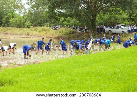 LAMPOON, THAILAND -JUNE 6 :Students in Jakkamkanatorn school uniform are planting rice in Agriculture class, on June 6 ,2014 in LAMPOON, THAILAND