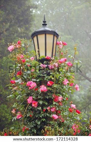 Lamppost covered with beautiful pink spring roses - stock photo