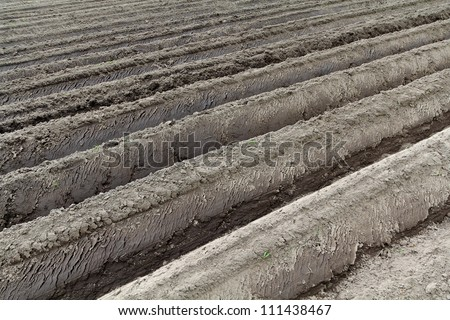 land prepared for planting potatoes