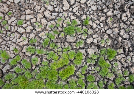 land with dry cracked mud ground texture with new plant - stock photo