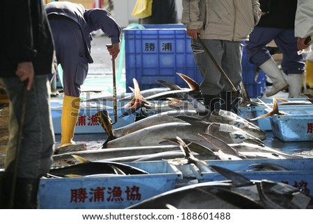 Landing of tuna fishing port Katsuura