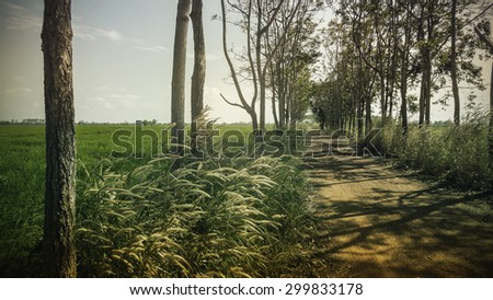 Landscape a dirt road between grassland. white reeds field. Blue sky.Chachoengsao,Thailand (Vintage tone color) - stock photo