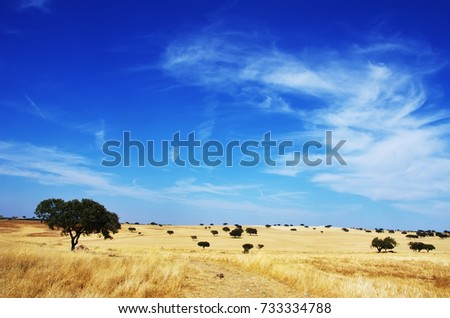 landscape. Alentejo region, south of Portugal