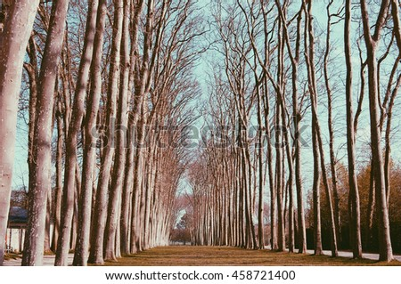 Landscape alley of trees in the park. Trees without leaves. Vintage film style coloring. Noise and Grain added. - stock photo