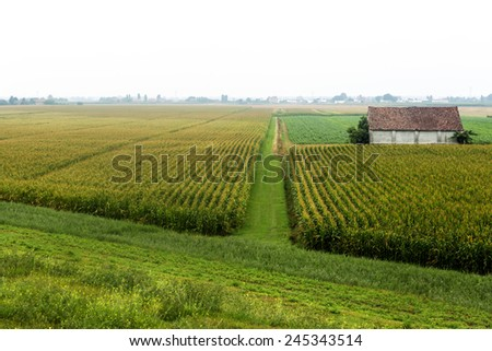 Landscape along the Po river near Ferrara (Emilia-Romagna, Italy) at summer