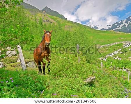 Landscape alongside the Grossglockner High Alpine Road  - stock photo