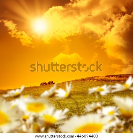 landscape and daisies over sunset - stock photo
