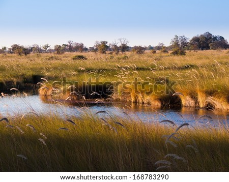 Landscape at Okavango river (Mopane Tongue, Moremi Game Reserve, Botswana) - stock photo