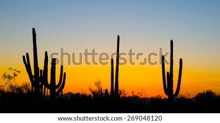Landscape at sunset in Saguaro National Park, Arizona, USA - stock photo