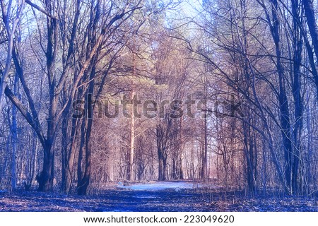 landscape autumn forest