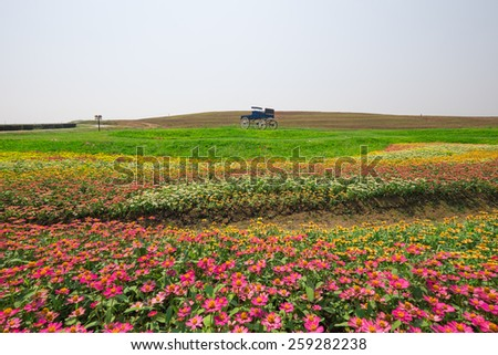 landscape background of carriage in flower garden.