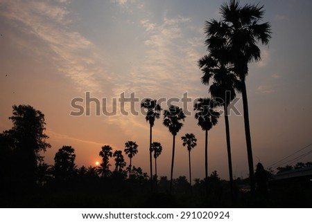 Landscape during sunrise in nature and palm trees.