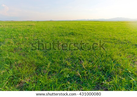 Landscape field of grass, sky and mountain.