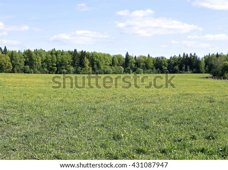 Landscape field with green grass, yellow dandelions and forest in the distance