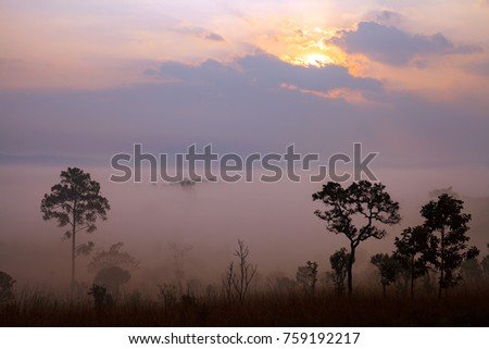 Landscape fog in morning sunrise at Thung Salang Luang National Park Phetchabun,Tung slang luang is Grassland savannah in Thailand