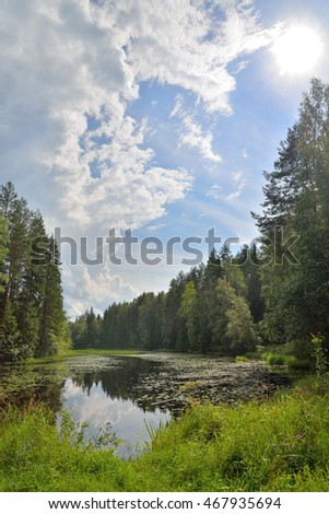 Landscape forest river overgrown with water lilies and reeds and a Sunny day